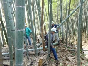 170308竹林作業1