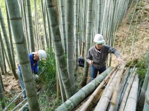 170308竹林作業2