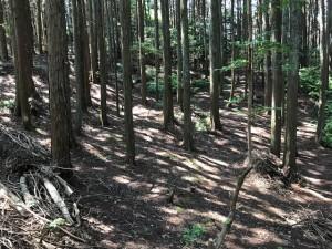 170615檜林後